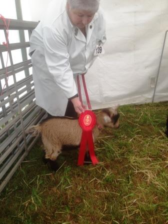 Royal Cornwall Show 004