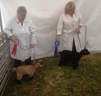 Royal Cornwall Show 005