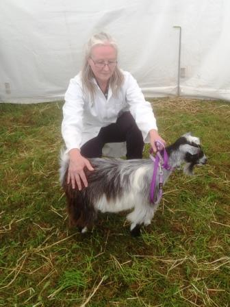 Royal Cornwall Show 006