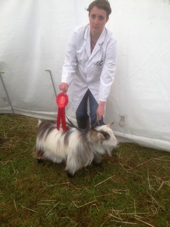 Royal Cornwall Show 010