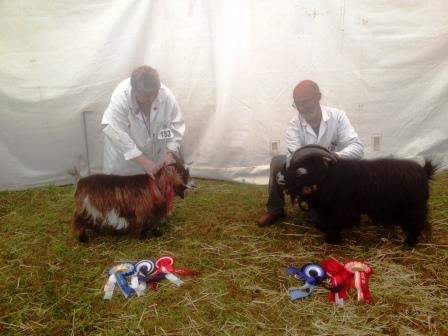Royal Cornwall Show 029